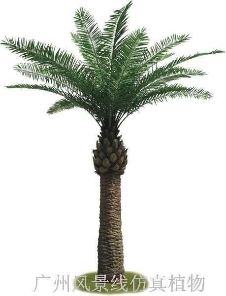 户外海枣树,棕榈树-风景线仿真植物