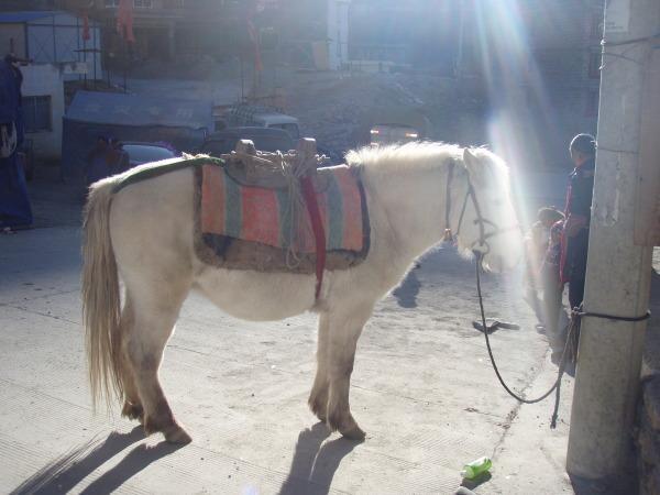 种马,马匹存栏最多的城市