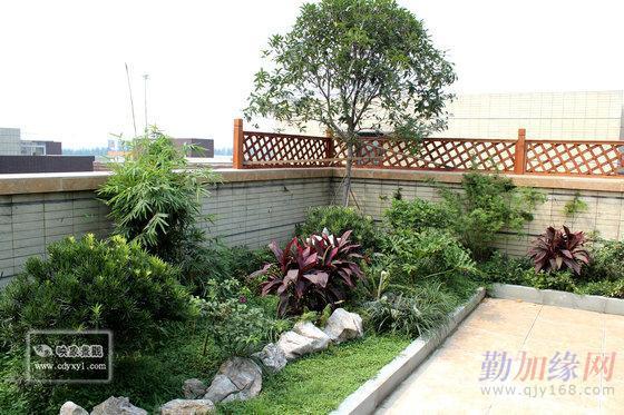 屋顶花园 别墅庭院 花园露台 植物苗木销售