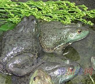 蛇和青蛙怎样冬眠