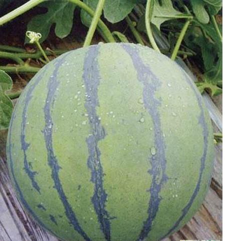 自制腌西瓜的方法步骤