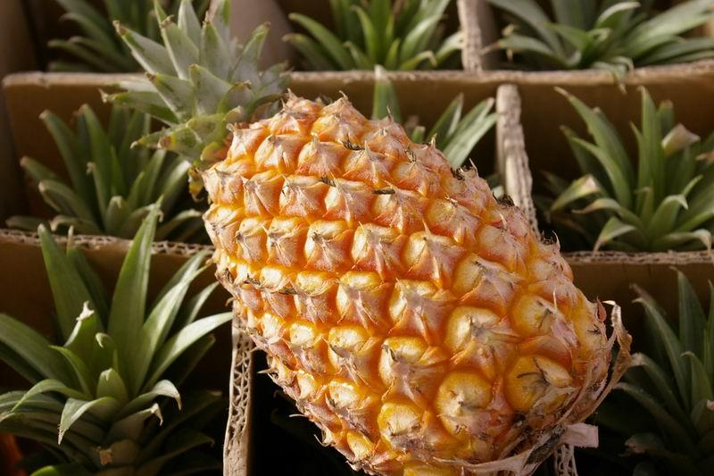 2015菠萝保险盒图解