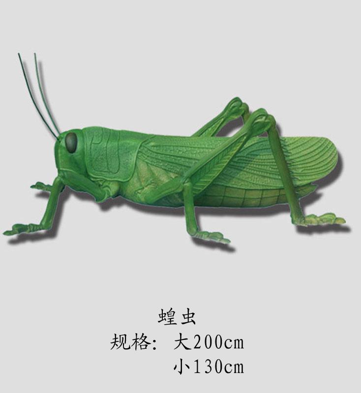 供应节肢动物——蝗虫