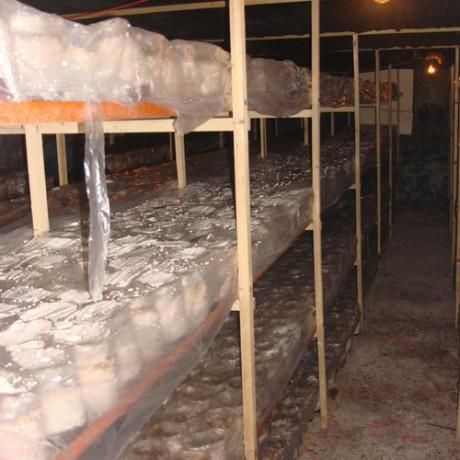 食用菌栽培车间专用高压微雾喷雾加湿器