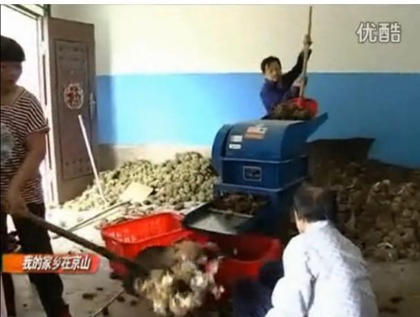 板栗剥刺机厂家 板栗剥壳机多少钱 板栗去刺机批发