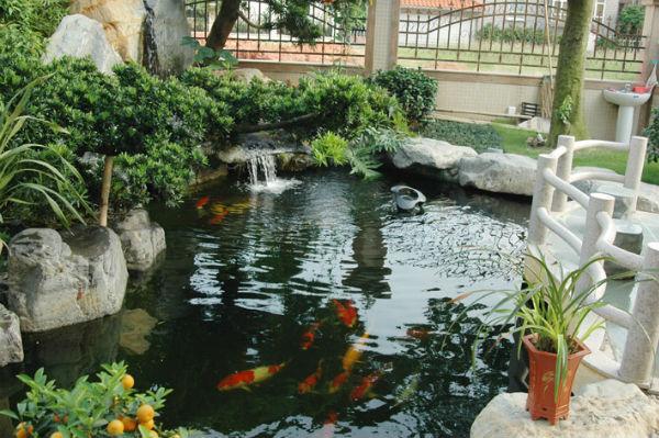 锦鲤鱼池设计建设 庭院景观鱼池专业施工 观赏鱼锦鲤放养     &