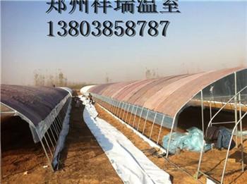简易朔料大棚食用菌温室大棚建造成本郑州祥瑞