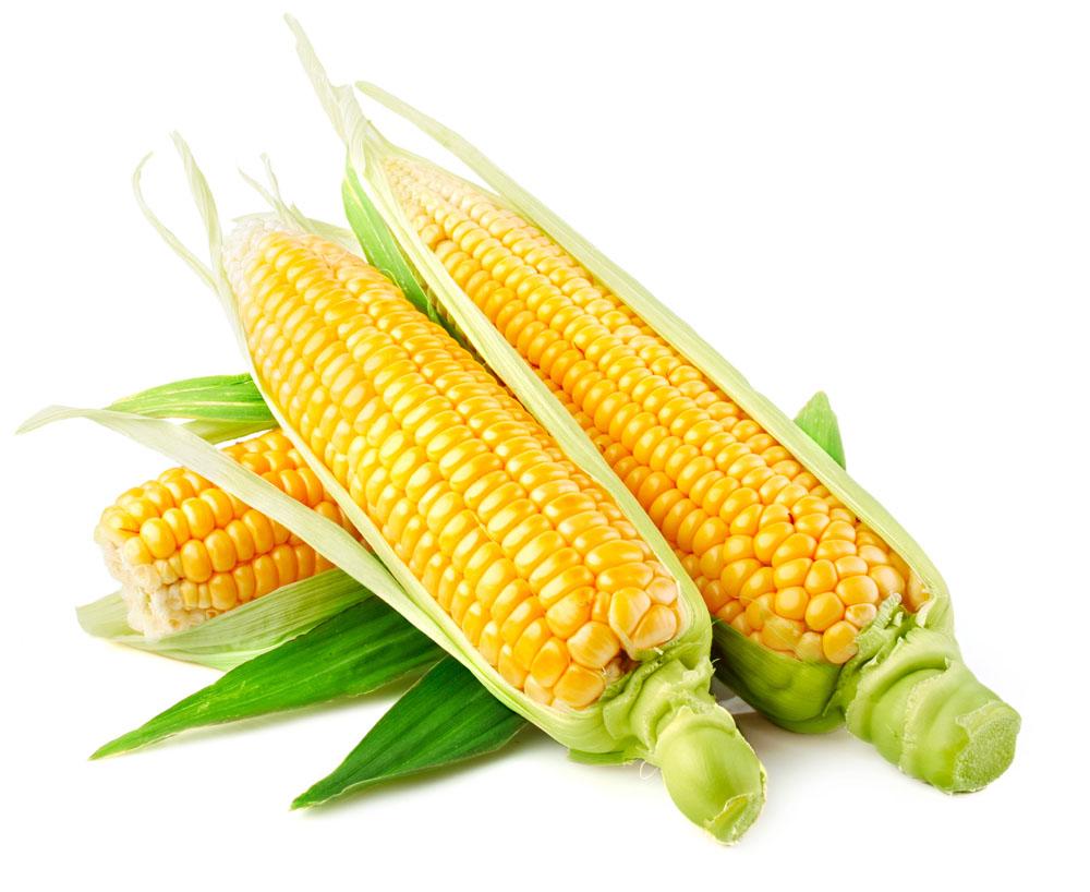 阜阳冷鲜美味玉米棒a级厂家直销图片