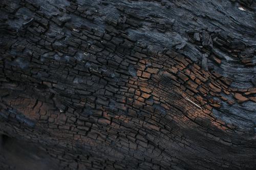 蓬江区乌木哪里有收购收购乌木阴沉木江西图片