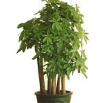 花卉植物租赁 花卉植物租赁价格 成都花卉植物租赁 乐盛园林供