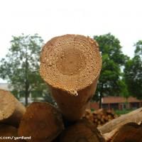 上海木板材进口商检清关时间单证费用