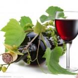成都进口葡萄牙红酒如何报关