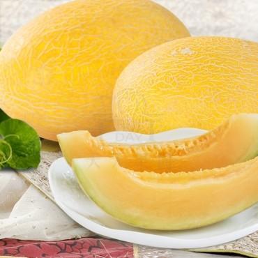 供应哈密瓜金蜜10号新疆精品哈密瓜新鲜水果香甜可口