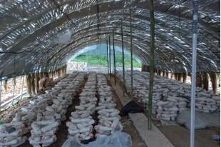 山西钢管镀塑养殖大棚