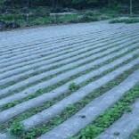 专业河北地膜厂家,优质农用地膜