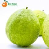 【热带水果】海南一级热带水果新鲜芭乐珍珠白心番石榴1斤装批发件包邮