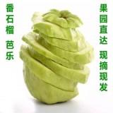 【新鲜水果】台湾珍珠芭乐特级番石榴新鲜水果批发农家果园直供营养美味