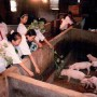 哈尔滨农村体验夏令营、黑龙江成长夏令营、自强教育
