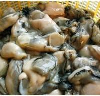 深圳生蚝的做法_生蚝多少钱一斤