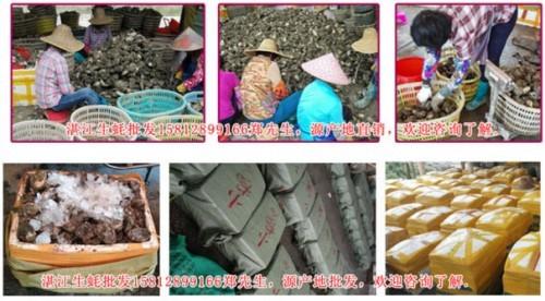 阳江生蚝怎么那么便宜湛江生蚝图片