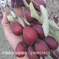 高平新疆灰枣批发多少钱