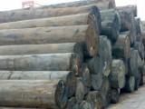 厦门原木进口报关需要注意什么