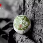新会柑普茶8个装多少钱 柑普茶的功效与作用 陈皮普洱茶萃