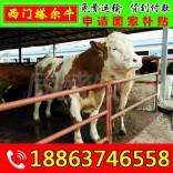 肉牛养殖前景 浚县肉牛养殖效益分析