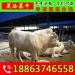 应县肉牛养殖场