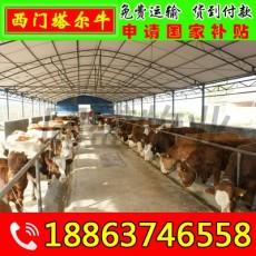 杂交肉牛犊批发 马尾区小黄牛价格