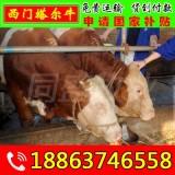 陆川县肉牛犊养殖技术