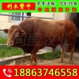 钦南区哪里有大型肉牛养殖基地