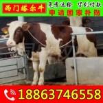 高平肉牛养殖方法