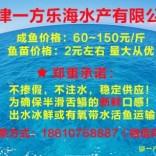 天津塘沽鳎目鱼鳎米鱼