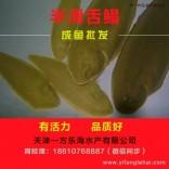 江苏连云港鳎鱼鳎米鱼批发中心