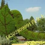 可爱的绿雕造型,大型的雕塑造型,雕塑造型厂家直销!