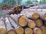 阿根廷蒺藜木进口清关