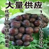 供应出售辽宁优质巨峰葡萄13134166509
