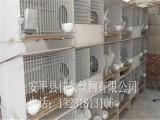优质兔笼专用兔子笼饮水器 兔用配件 饲料盒18位子母兔笼