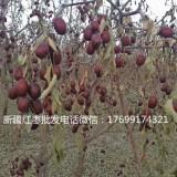 湖南新疆红枣批发多少钱
