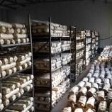 山东食用菌菌棒香菇菌棒