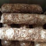 山东青岛出口食用菌菌棒香菇菌棒(808,2Kg)香菇菌包