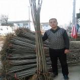 贵州香椿苗栽培